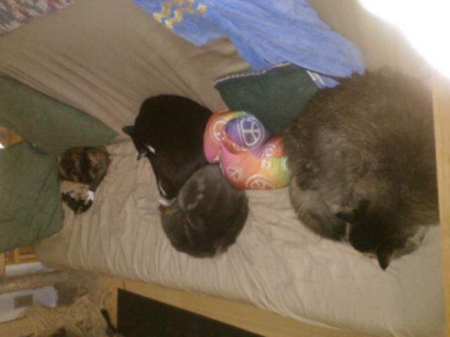 Vin, Loki, Hufflepuff and Edison